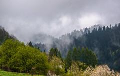 After rain some foggy mist. (Carl Terlak) Tags: green hills mountains emount sony apsc nex6 sigma