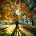 Queenstown Gardens, Autumn.