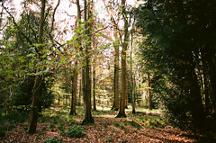 light's playground (Andrew.King) Tags: nikon f3 hp f3hp film analogue wood woods woodland forest trees light shadow highlights leaves spring salcey ektar 100 green warm landscape countryside wild