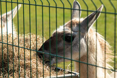 "Newham Grange Farm at Easter • <a style=""font-size:0.8em;"" href=""http://www.flickr.com/photos/156364415@N06/33855913658/"" target=""_blank"">View on Flickr</a>"