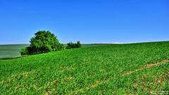 The view (Szymon Karkowski) Tags: outdoor landscape nature agriculture field tree grain hill green blue sky bushes spring horizon opole voivodeship nowa cerekwia poland nikon d7100