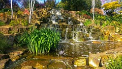 Waterfall at Regents Park. (peterileypics) Tags: london park regentspark bird waterfall lightroom water