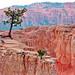 Tenacious Trees, BryceCanyon, UT 9-09