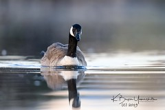 (bryce yamashita) Tags: belmar belmarpark colorado d850 lakewoodco nature nikon wildlife yamashita