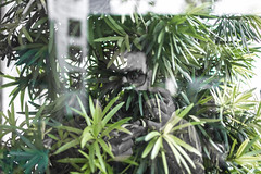 (Hélder Santana) Tags: héldersantana heldersantana santana portfolio brasil brazil hdsantana corseletiva selectivecolor cutout pretoebranco black white blackandwhite natural light luz naturallight luznatural daylight sunlight dia day chiaroscuro claro clear escuro dark contraste contrast lowkey bokeh dof raw retrato portrait people pessoa rua street streetphotography fotografiaderua cidade city cityscape urban urbana green verde nature lens prime nikon nikkor 35mm 18 f18 nikon35mmf18 nikon35mmf18g nikkor35mmf18g nikkor35mmf18 35mm18 35mmf18 mirror espelho reflexo reflex reflection jampa joãopessoa paraíba autorretrato autoretrato selfie selfportrait