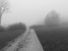 20Meter Feldweg (shortscale) Tags: feldweg nebel busch schwarzweiss blackandwhite noiretblanc monochrome