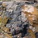 Clast-rich impact pseudotachylite (Sudbury Breccia, Paleoproterozoic, 1.85 Ga; Windy Lake Northwest roadcut, Sudbury Impact Structure, Ontario, Canada) 38