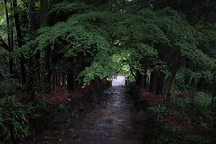 20190430X100f_3621 (Gansan00) Tags: fujifilm x100f fujifilmxseries japan yamaguchi ブラリ旅 山口県 snaps 4月 hofu 防府市 阿弥陀寺 新緑 green rain