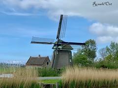 We also have the mills / en dan hebben we de molens nog! In st Maartensbrug (ronaldort1311) Tags: molen mill