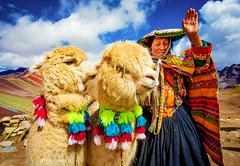 Alpacas (Luis Sousa Lobo) Tags: 738a19322 peru cusco quetchua andes andino alpacas canon 5d mark iv 1740 rainbow mountain siete colores peruvian portrait