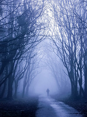 Alone (stephenbryan825) Tags: merseyside woolton alone aloof apart art branches depressed depression dramaticlight fog foggy haze individual isolated leaves lone loneliness lonely man manwalking mist moody morning people rejection single trees trunks