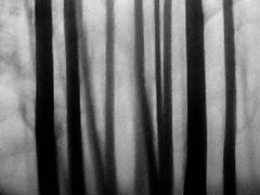Trees (stephenbryan825) Tags: merseyside woolton art branches dramaticlight experimental fog foggy haze leaves mist moody morning trees trunks