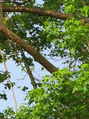 Green Foliage. (dccradio) Tags: lumberton nc northcarolina robesoncounty outdoor outdoors outside nature natural tree treebranch branch branches treebranches leaf leaves greenery foliage sky bluesky treelimb treelimbs scenic beauty godscreation canon powershot elph 520hs photooftheday photo365 project365