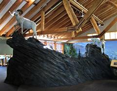 Dall Sheep Exhibit (R D C) Tags: 2012 ak denalinationalpark alaska