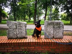 Nis (dinapunk) Tags: nis serbia basrelief stone rock carving history antique park dog pet animal rottweiler