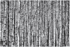 The Woods and the Trees... (Ody on the mount) Tags: abstrakt anlässe bäume canon g7xii kunst landschaft pflanzen powershot rahmen wald wanderung abstract art bw forest frame landscape monochrome sw tree woods germany