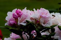 """foto adam zyworonek fotografia lubuskie iłowa-9516 • <a style=""""font-size:0.8em;"""" href=""""http://www.flickr.com/photos/146179823@N02/33874173458/"""" target=""""_blank"""">View on Flickr</a>"""