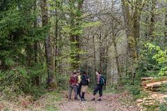 29-Palabres (Alain COSTE) Tags: 2019 forêt hautevienne lavarache limousin nikon ocb printemps randonnée eymoutiers france