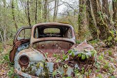 36-Coffre avant (Alain COSTE) Tags: 2019 forêt hautevienne lavarache limousin nikon ocb printemps randonnée eymoutiers france