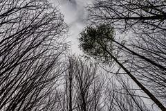 47-Perpective printanière (Alain COSTE) Tags: 2019 forêt hautevienne lavarache limousin nikon ocb printemps randonnée eymoutiers france