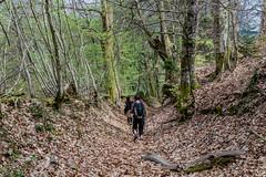 49-Descente feuillue (Alain COSTE) Tags: 2019 forêt hautevienne lavarache limousin nikon ocb printemps randonnée eymoutiers france