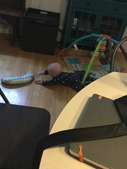 """Sam Tries to Crawl • <a style=""""font-size:0.8em;"""" href=""""http://www.flickr.com/photos/109120354@N07/33875244108/"""" target=""""_blank"""">View on Flickr</a>"""