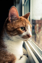 Waiting (Nicholas Erwin) Tags: cat luke kitty feline animal pet meow waiting windowlight window rainy spring gloomy moody orangetabby orangecat fujifilmxt2 fujixt2 xf1024mmf4rois xf1024 fuji1024 waterbury vermont vt unitedstatesofamerica usa america fav10 fav25 fav50