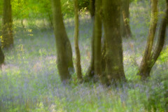 Burleigh Woods (23 of 52) (Sue_Hutton) Tags: burleighwood loughborough may2019 spring afterrain ancientwoodland bluebells evening icm