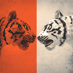 day 122 (Randomographer) Tags: project365 plastic tiger face faceoff digital art orange white toy bengal big cat striped growl graphic design duotone wild animal painted miniature 122 365 2019