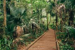 Flat Island Preserve (J. Parker Natural Florida Photographer) Tags: flatislandpreserve florida leesburg forest hike hiking landscape nature outdoor scenic spring trail woods centralflorida floridahikes boardwalk lush tropical swamp wetland naturalbeauty