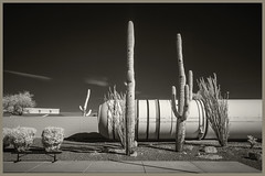 Pima A&S IR #46 2019; Shuttle Solid Rocket Booster & Saguaros (hamsiksa) Tags: aviation spaceexploration space aviationmuseums spacemuseums flight historyofflight historyofspaceexploration pimaairandspacemuseum arizona tucson blackwhite infrared digitalinfrared spaceshuttle rockets nasa saguros cacti carnegieagigantea