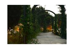 Morning Walk (balu51) Tags: ferien spanien andalusien morgen morgenspaziergang sonnenaufgang garten rosengarten rosen weiss grün morningwalk morning sunrise rosegarden roses white green spring spain april 2019 copyrightbybalu51