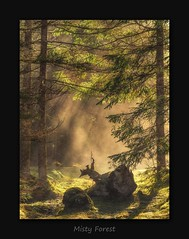 Misty Forest (MC--80) Tags: misty forest tyrol