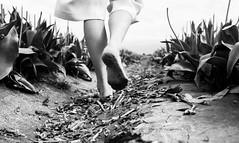 Tulip Season (Photo Alan) Tags: vancouver canada blackwhite blackandwhite monochrome field tulipfield tulipfestival