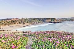 Espagne, plage et tapis de fleurs de sorcières à Suances (Roger-11-Narbonne) Tags: village suances mer océan plage sable fleurs falaise