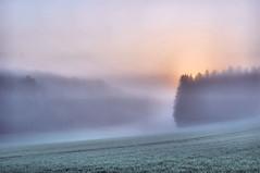 Foggy morning11 (Franck gallery) Tags: