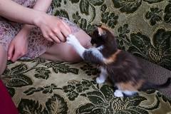 (lolita.khlynina) Tags: white black orange dress home animals animal pets pet paw hand girl woman people kitten cat