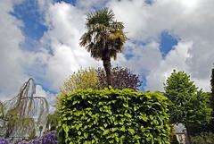 Normandie 2016 / Normandy 2016 (Joseff_K) Tags: nikon nikond80 d80 tamron tamron1750f28 normandie normandy cotentin cloud nuage arbre garden jardinpublicdecherbourgocteville cherbourgocteville cherbourg publicgarden contreplongée lowangleshot jardinpublic