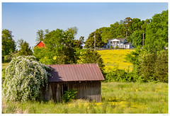 Good 'ole Farm (thuygiaho) Tags: knoxcounty country farm barn buttercup flowers tennessee westknoxville