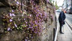 Flowers on the wall. . . (CWhatPhotos) Tags: cwhatphotos photographs photograph pics pictures pic picture image images foto fotos photography that have which with contain dof bokeh flowers flower depth field durham crosgate hill bank woman wall