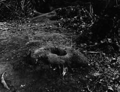 bois mort (ludob2011) Tags: bronica etrs zenza zenzanon film filmisnotdead ilford hp5 ilfotec lc29 wood forest foret bois souche mousse foam lichen sol ground