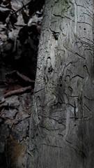 20180529_113632 (vorosveron86) Tags: mementomori woods deadwood forest oldforest darkforest dark darkness mystic nature adventure entropy