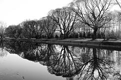 By the lake (prokhorov.victor) Tags: пейзаж природа озеро вода отражение чб