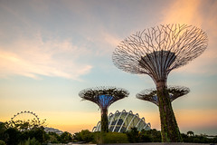 Singapore - 138 (coopertje) Tags: singapore asia azie gardensbythebay marina bay sands hotel casino mall park garden tree giant enormous artificial architecture lights sunset supertreegrove lightshow laser