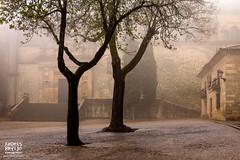Guardianes de la historia (Andres Breijo http://andresbreijo.com) Tags: niebla fog jaen baeza arboles trees frio cold ciudad patrimoniodelahumanidad patrimonio
