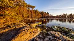 Morning mood in Uutela II, East-Helsinki 🌴🌴 (Esa Suomaa) Tags: helsinki scandinavia suomi saaristo suomenlahti sunrise finland trees tree trail beach planetearth morning earlymorning sea olympusomd