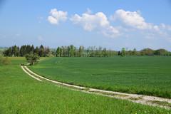Chemin campagnard (Croc'odile67) Tags: nikon d3300 sigma contemporary paysage landscape campagne champ arbres trees chemin ciel cloud sky nature nuage