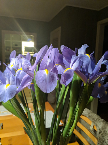 Irises from Alan
