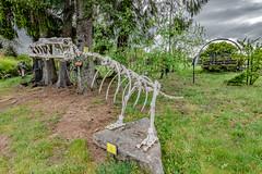 04-Jeune tractosaure (Alain COSTE) Tags: 2019 hautevienne lavarache limousin nikon ocb printemps sigma20mmf14 eymoutiers france musée de la récup muséedelarécup