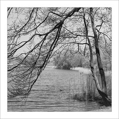 Hasselblad 500 C/M, Zeiss Sonnar 4/150mm, Rollei Superpan 200 (Dierk Topp) Tags: 6x6 bw bäume zeisssonnar4150mm analog clouds hasselblad hasselblad500cm herrenteich lake landscapes monochrom sw trees wald water wood